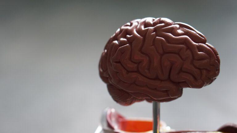 Gewohnheiten und das Gehirn